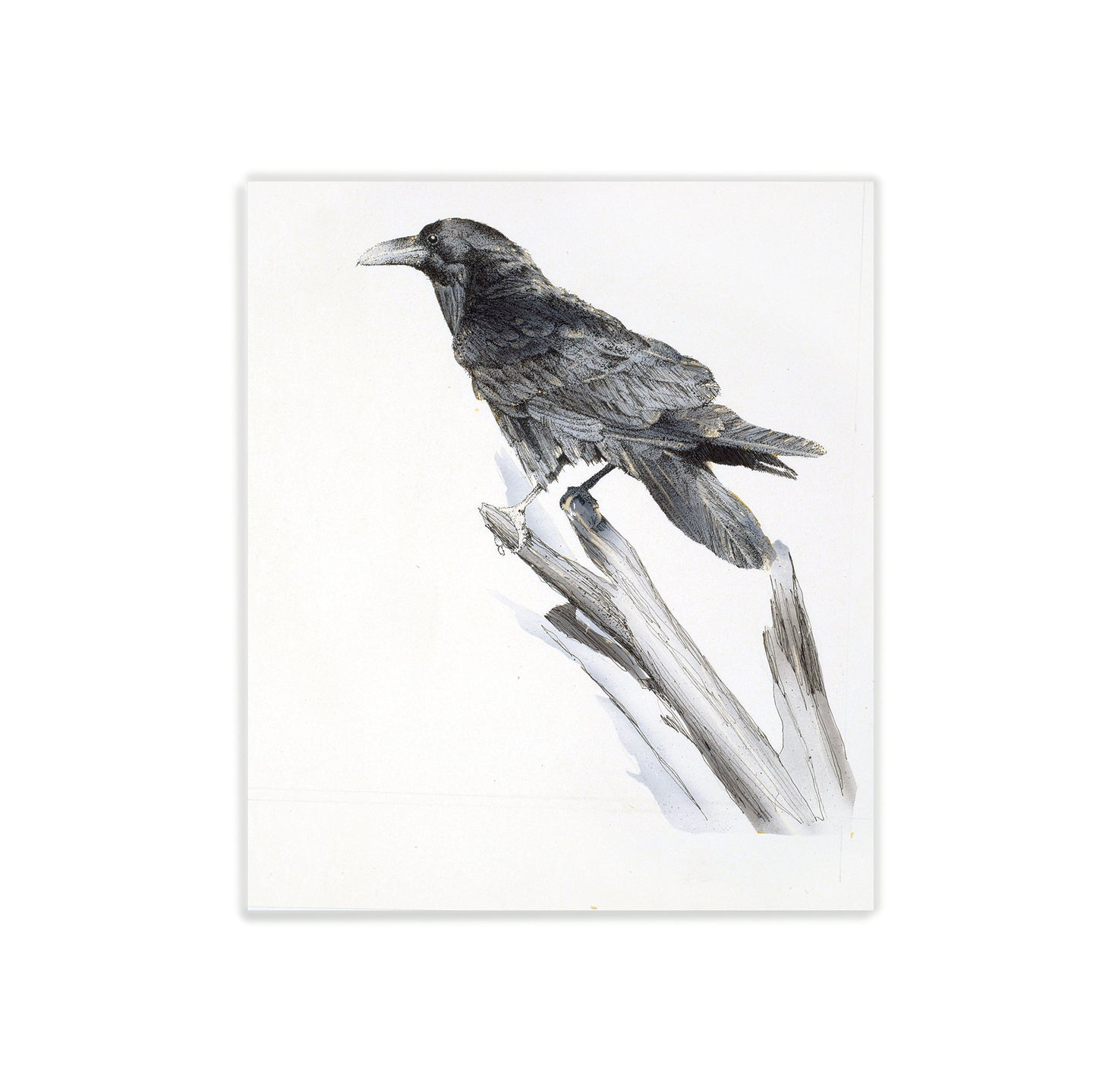 Raven on a stick watercolor