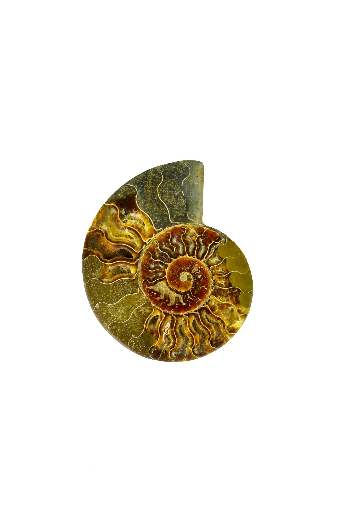 Madagascar Ammonite - Sliced