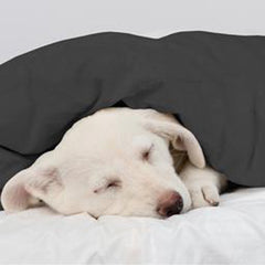 Rescue dogs and weighted blankets