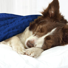 Calming Pets read our customer reviews