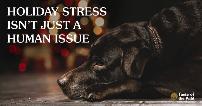 Anxiety in pets during the Holidays.