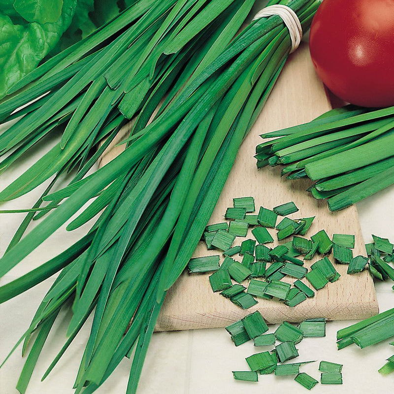 Herb Seed - Garlic Chives