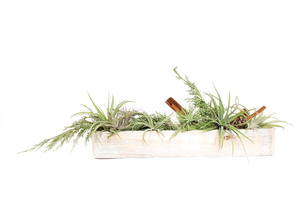 AIR PLANT HOLIDAY PLANTER