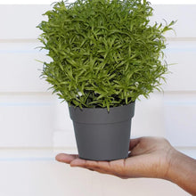 Load image into Gallery viewer, 0209 Decoratives -Potted Plastic Artificial Plants