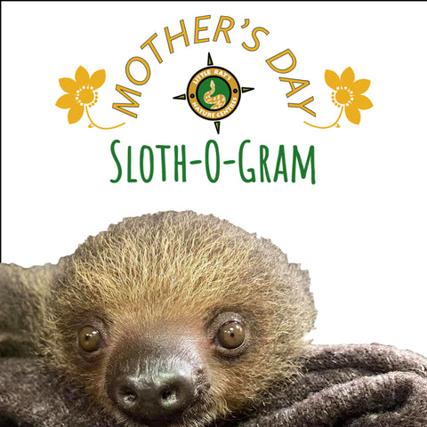 Mother's Day Sloth-o-grams!