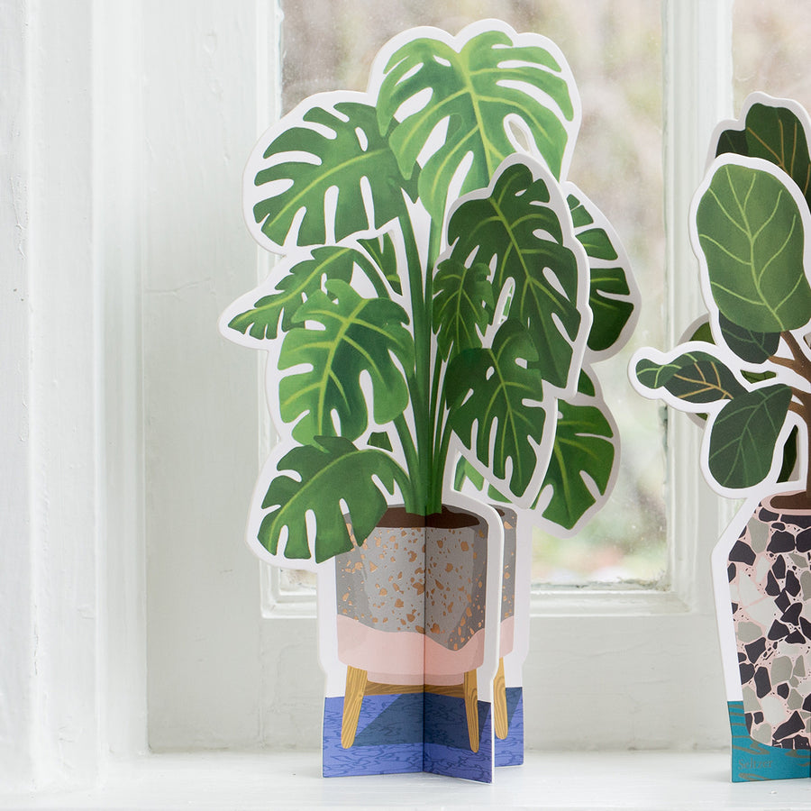 Paper Plant - Monstera
