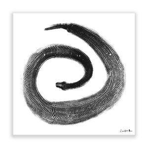Python Gyotaku No. 02 (Minimalist) by Rudie Lee