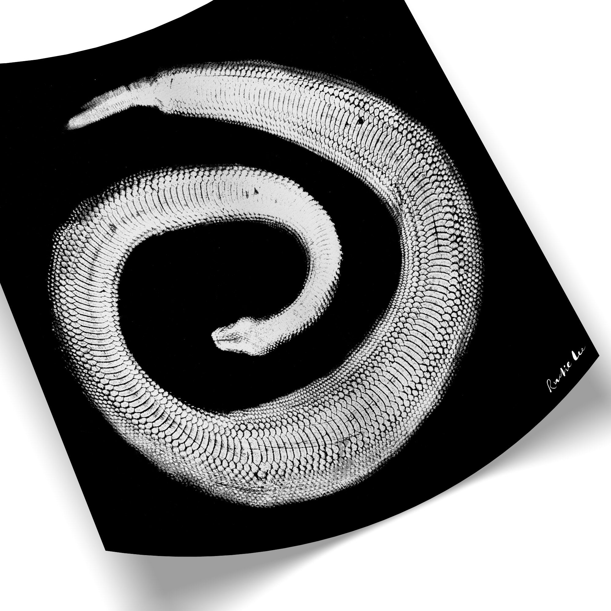 Python Gyotaku No. 02 (White Black) by Rudie Lee