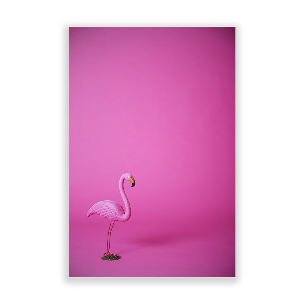 Silly Flamingo