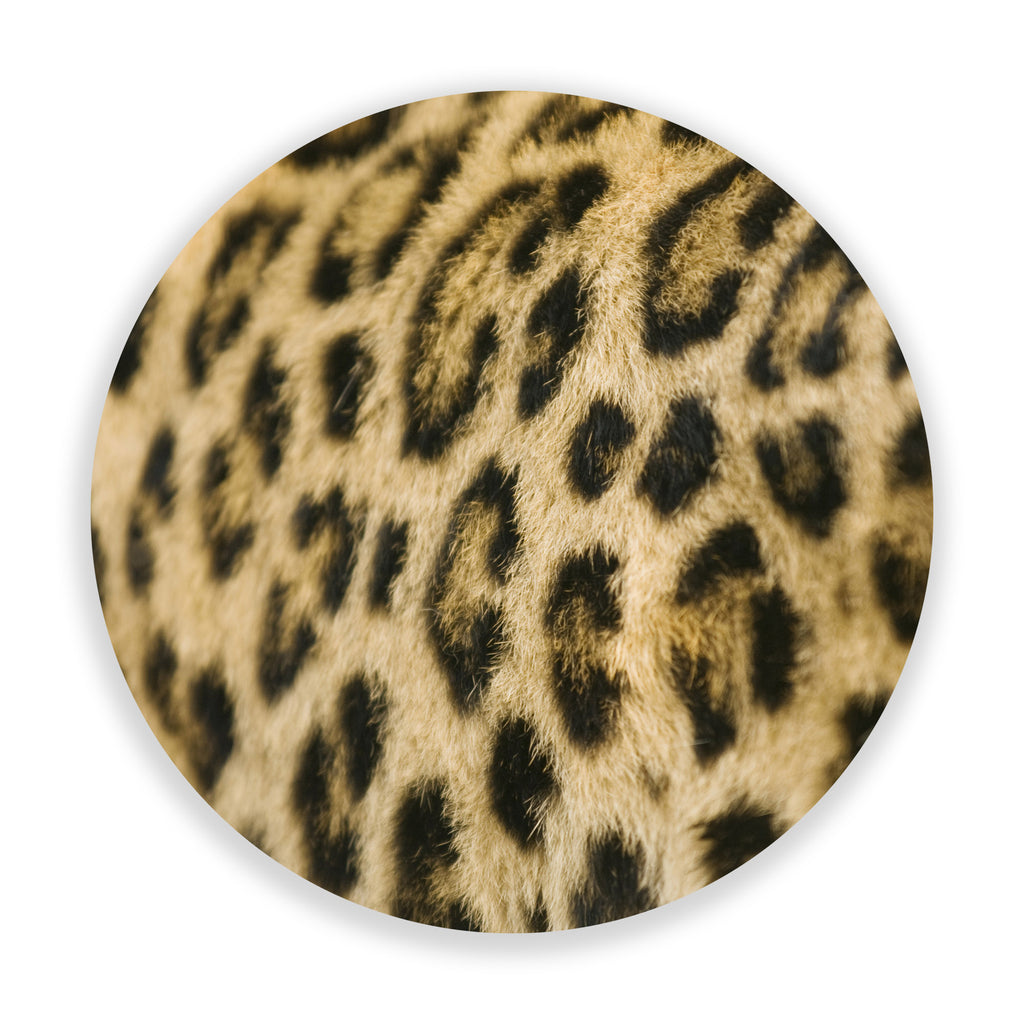 Supple Leopard (Circle)