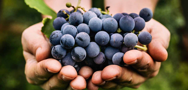 The Worlds Most Important Wine Grapes Part I - Red Wine