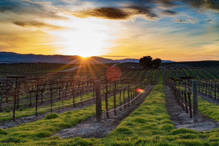 10 Top Tips for Wine Travellers
