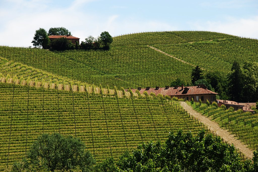Langhe vineyard views