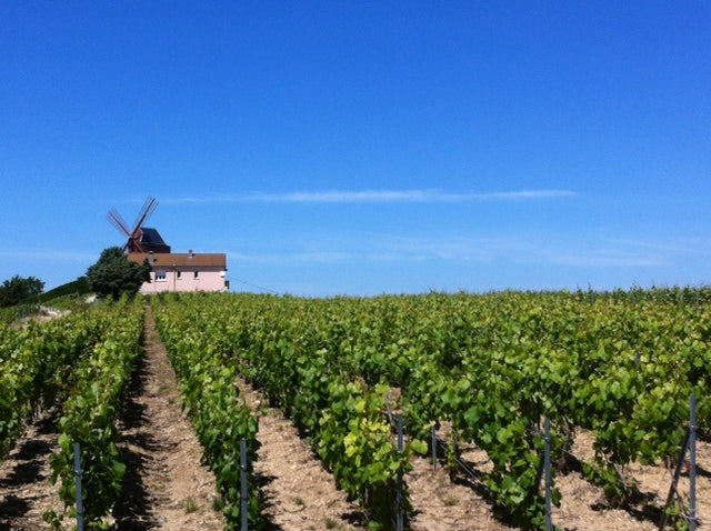 Champagne vineyards, what to see, Lazenne