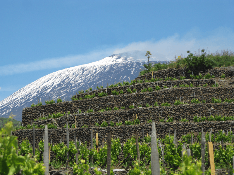 Wine Stores around Etna in eastern Sicily