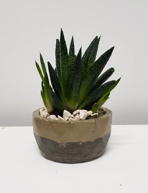 Natural concrete planter