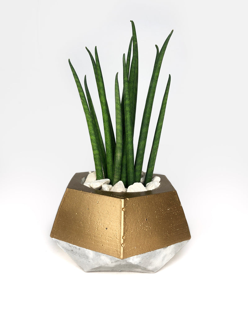 Grey & gold concrete planter