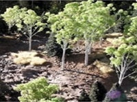 GCG: Medium Aspen Trees | Chimera Hobby & Games