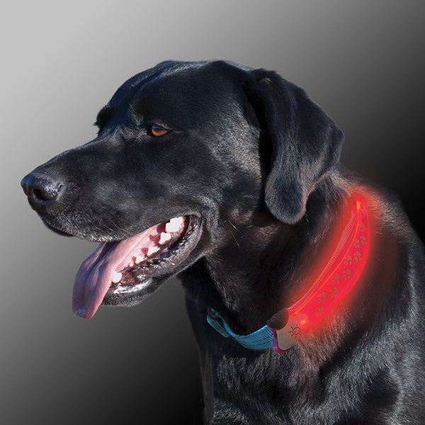 Nite Dawg LED Light-Up Dog Collar Cover