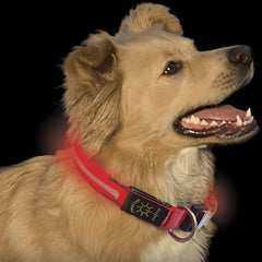 Nite Dawg LED Light-Up Dog Collar