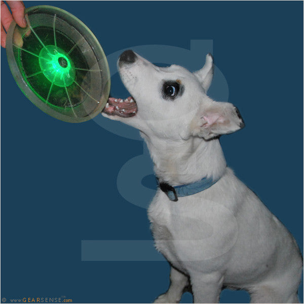 led light-up dog discuit panzer