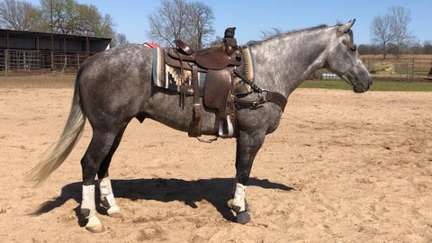 #29 Buddy 4 year old AQHA gelding