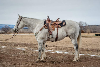 #34 Chism 11 year old AQHA gelding