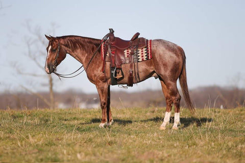 #33 Ima Red Eddie 4 year old aqha gelding