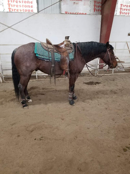 #53 Big Boy 4 year old AQHA STUD