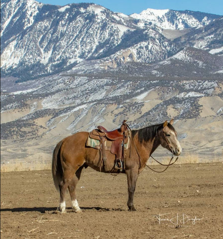 #23 Smokey 5 year old grade gelding