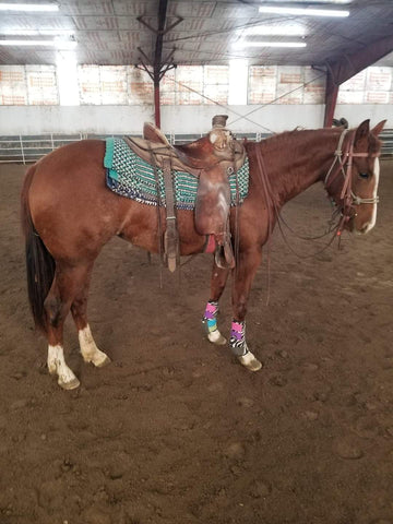 #13 SMARTY 2 year old AQHA filly