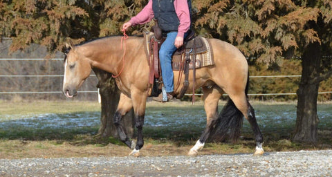 #15 Buck 4 year old AQHA gelding
