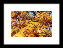 Load image into Gallery viewer, Golden Autumn Leaves - Framed Print