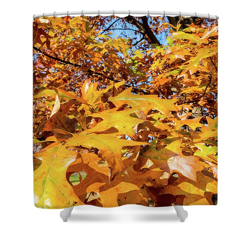 Golden Autumn Leaves - Shower Curtain