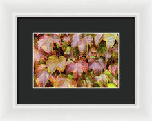 Load image into Gallery viewer, Grape Leaves - Framed Print