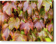 Load image into Gallery viewer, Grape Leaves - Acrylic Print