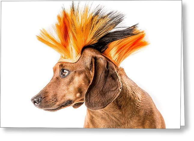 Punk Rock Dachshund - Greeting Card