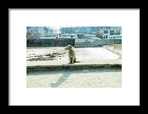 Stray by the River Signed First Edition - Framed Print