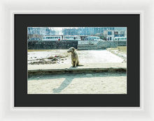 Load image into Gallery viewer, Stray by the River Signed First Edition - Framed Print