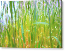 Load image into Gallery viewer, Tall Grass in Herat Pastel - Acrylic Print
