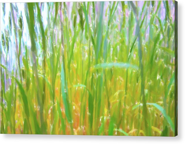 Tall Grass in Herat Pastel - Acrylic Print