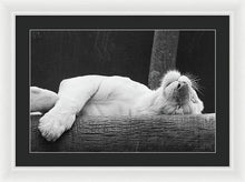 Load image into Gallery viewer, Tiger Dreams - Framed Print