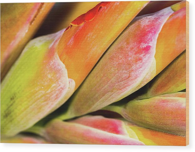 Wrapped Red Canna Flowers - Wood Print