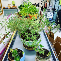 Potted plants! Succulents Etc Plant Sale Fundraiser