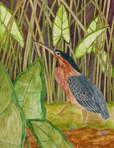 Saraya Cheney- Green-Backed Heron in Arrow Arum
