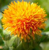 MaaDisha Ayurvedic Element Safflower Oil