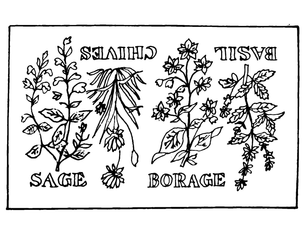 DiFranza Designs - The Herb Rug - Rug Hooking Supplies