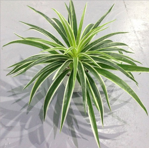 Artificial plants - Chlorophytum Branch home decor - NO Pot