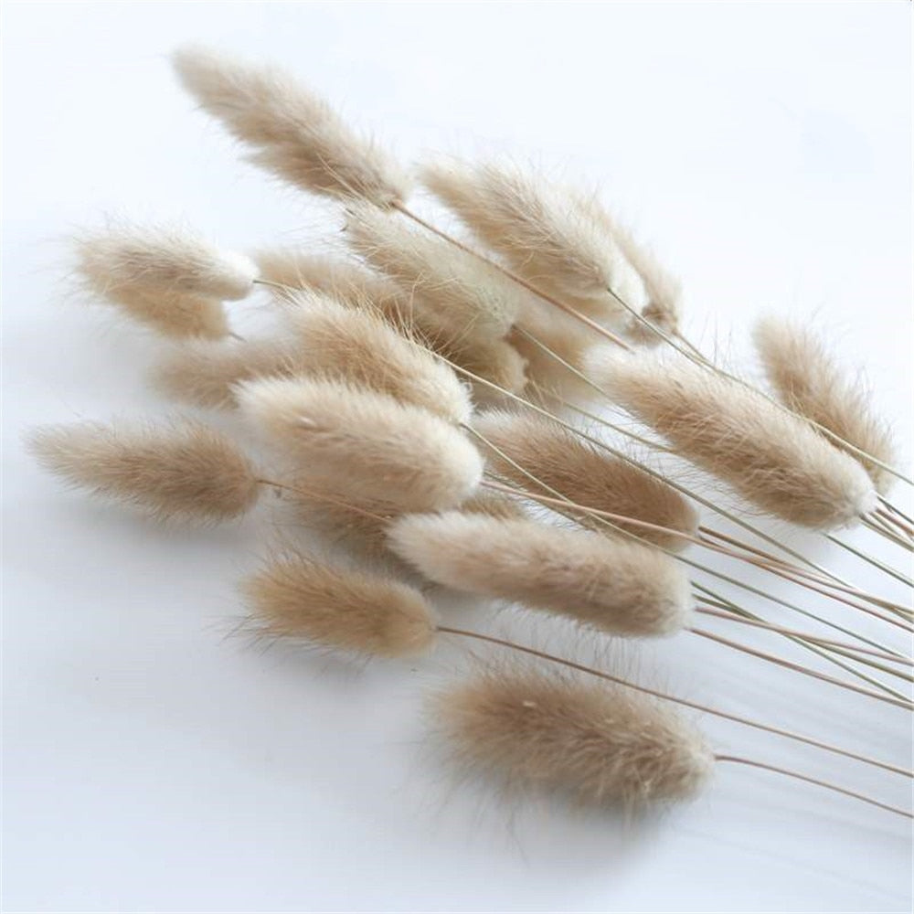 50Pcs/lot Natural Dried Rabbit Tail Grass Bunch