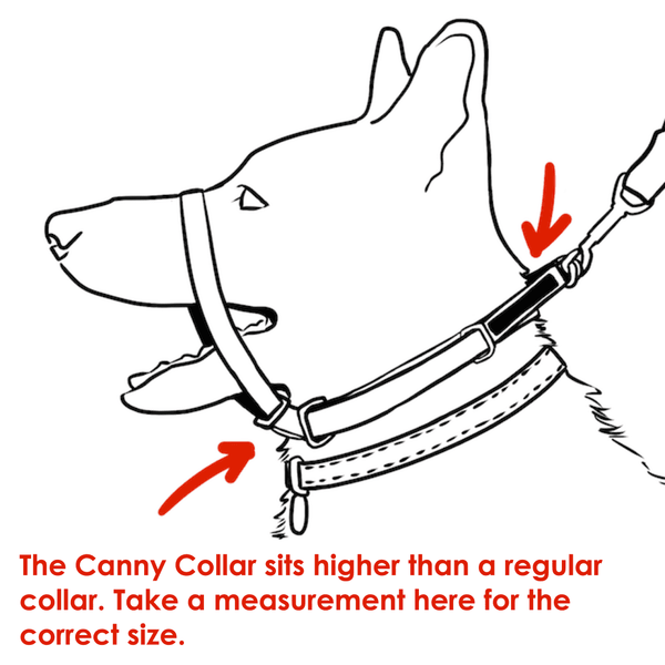 Measure neck here for correct size of Canny Collar